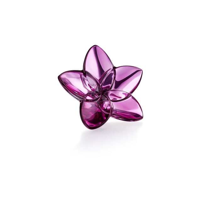 THE BLOOM COLLECTION, Peonia