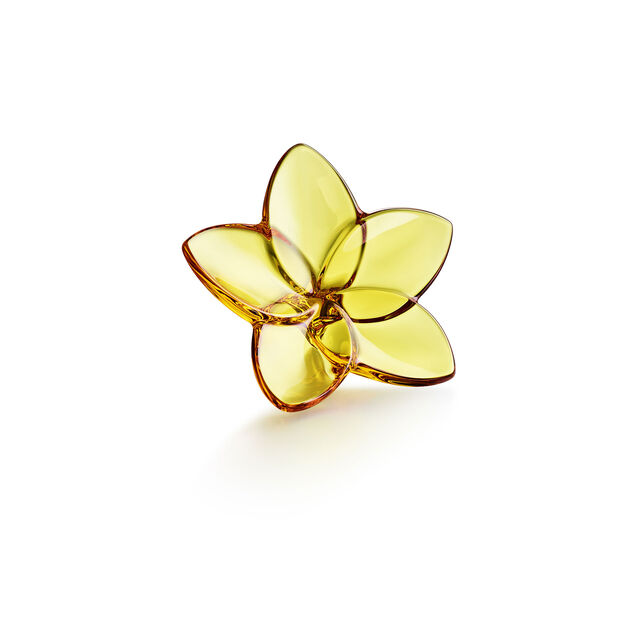 THE BLOOM COLLECTION, Ambra