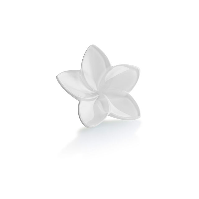 THE BLOOM COLLECTION, Bianco